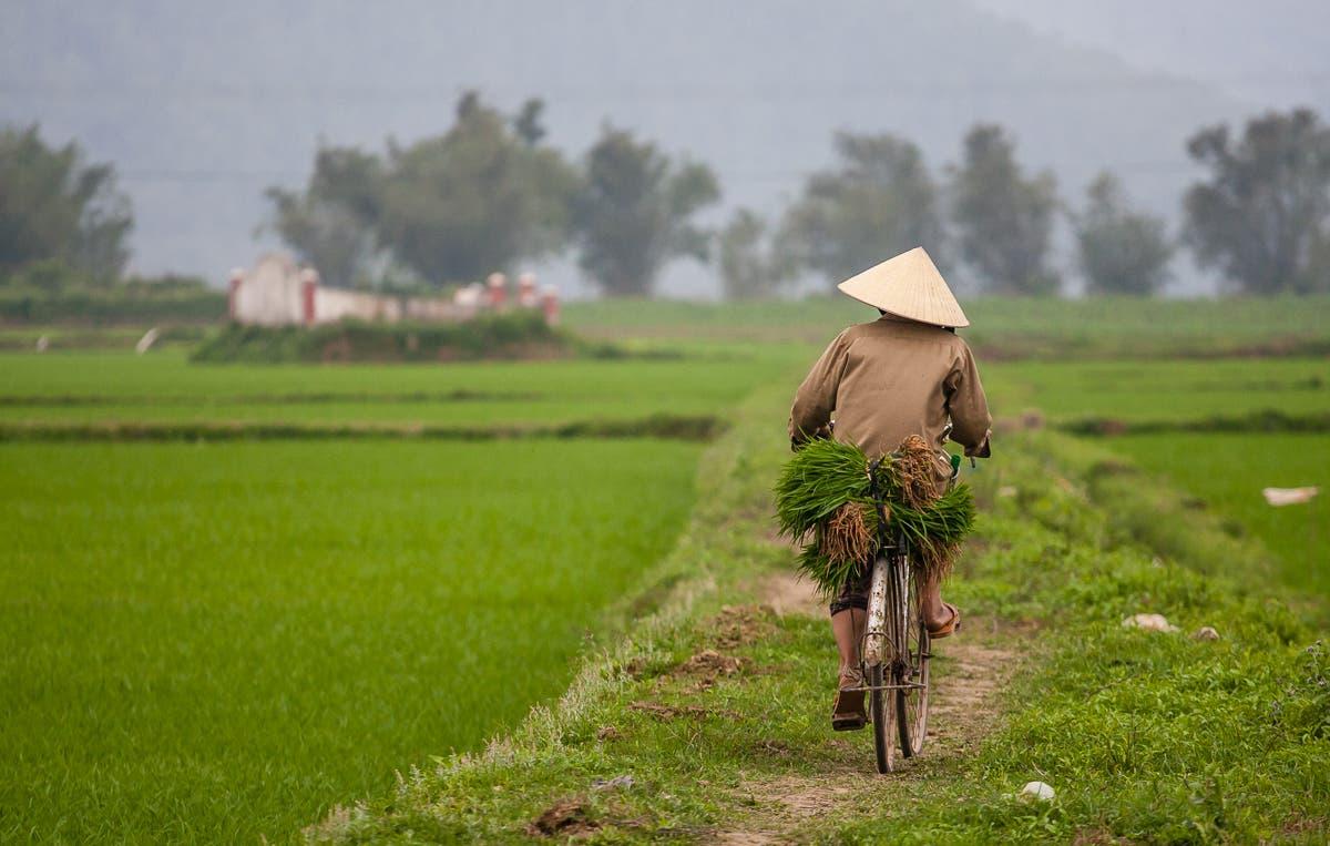Vietnamesische_Sommerrollen-30