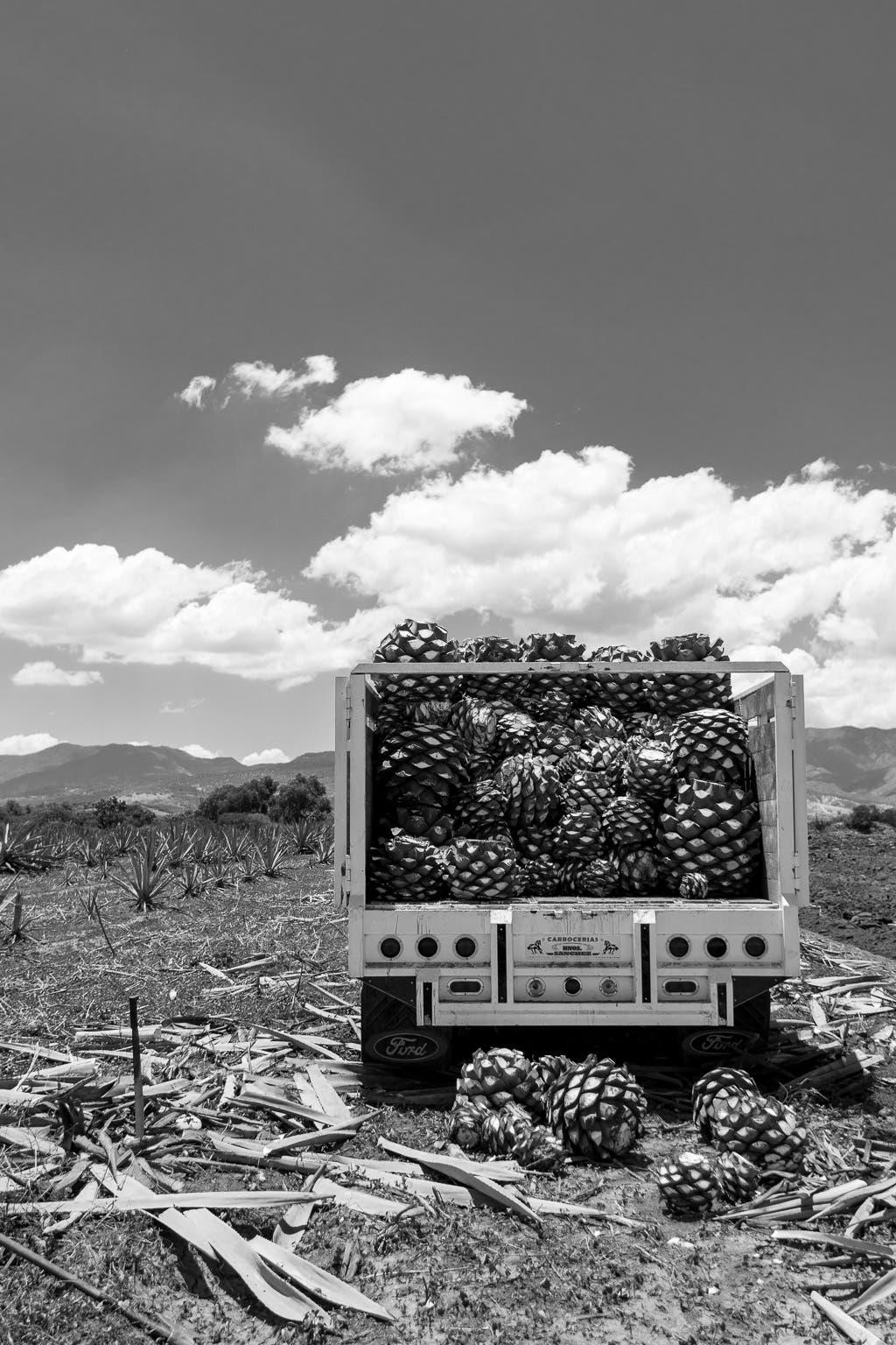 Ladefläche eines Lastwagens vollbeladen mit Früchten
