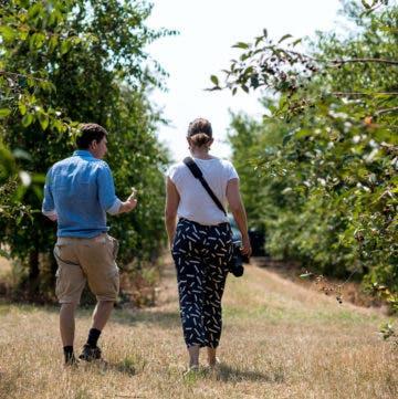 Menschen von hinten beim Laufen zwischen Apfelbäumen