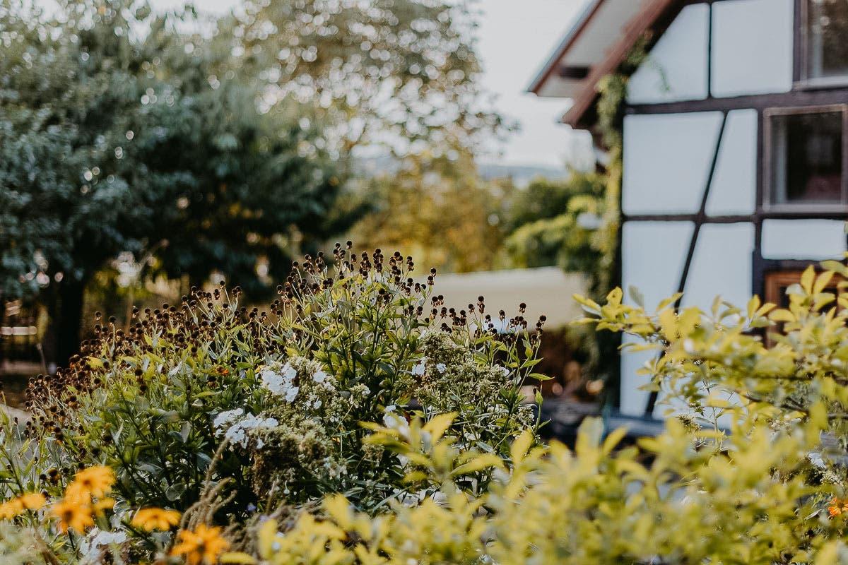 Ayurveda im Alltag: Grünpflanzen im Garten