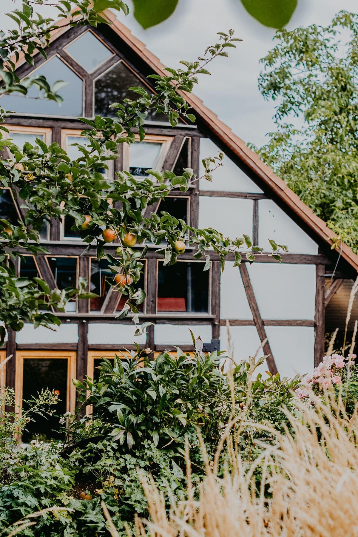 Fassade von Fachwerkhaus mit Fenstern und Apfelbaum davor