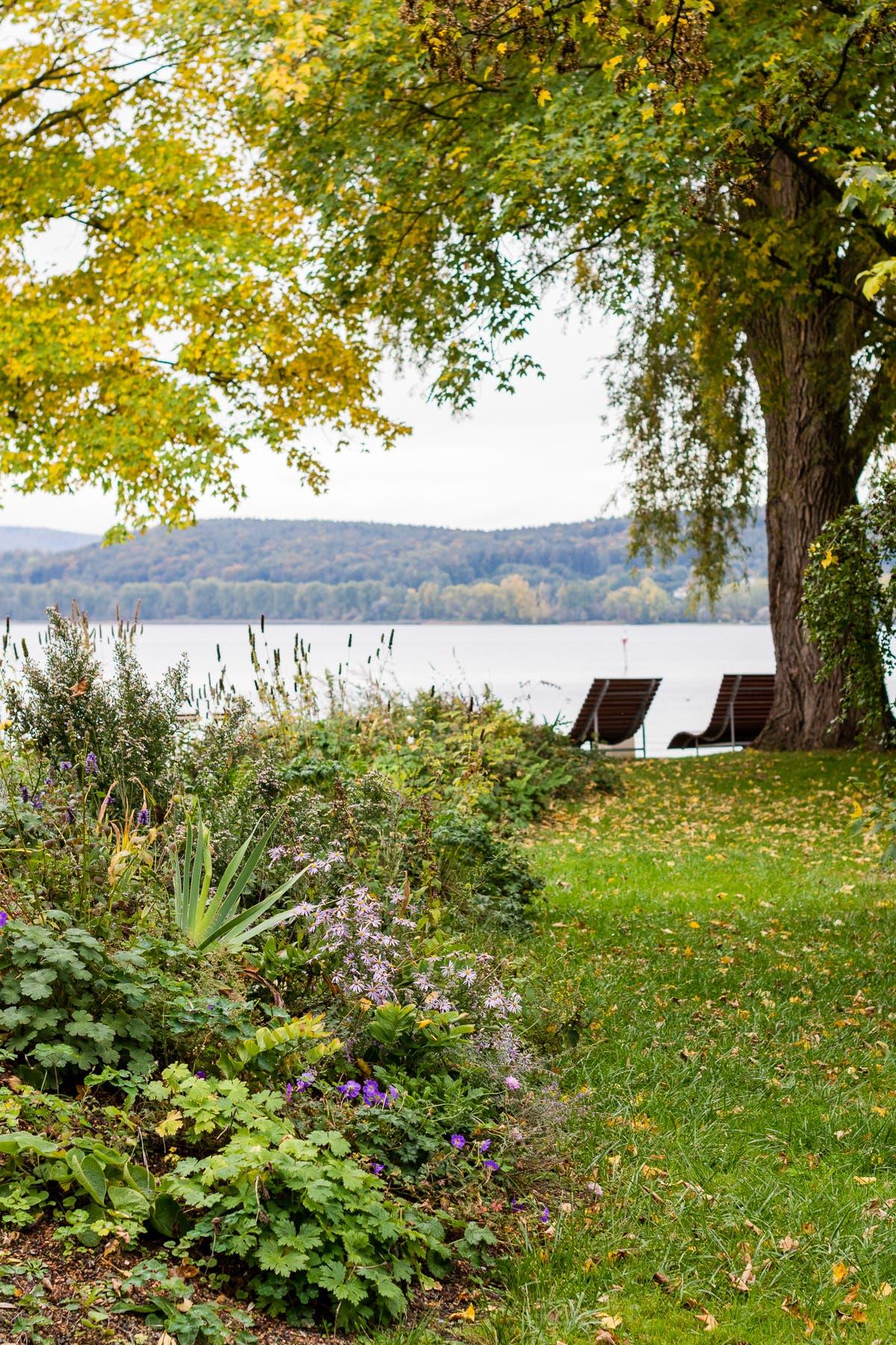 Grüne Wiese mit Blumen und einem Baum im Herbst. Zwei Stühle stehen an einem See.